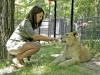 lion-feeding-at-the-game-farm-1